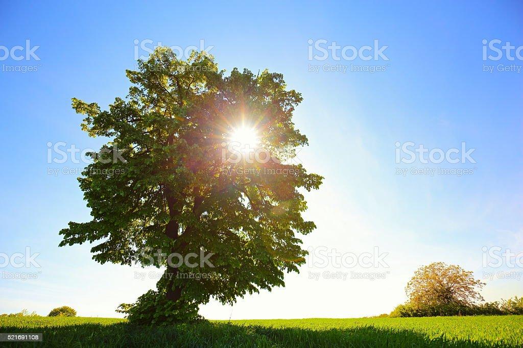 Beautiful Sunrise Landscape stock photo
