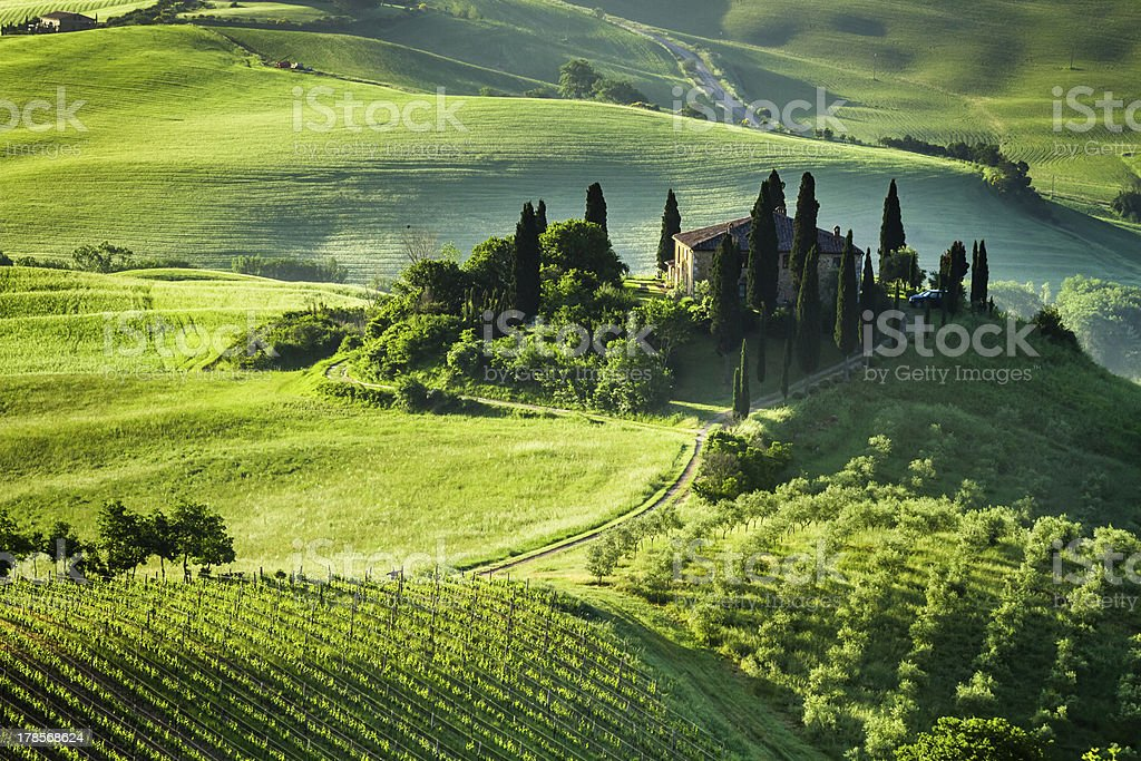 Beautiful sunrise of a green valley of olive groves stock photo