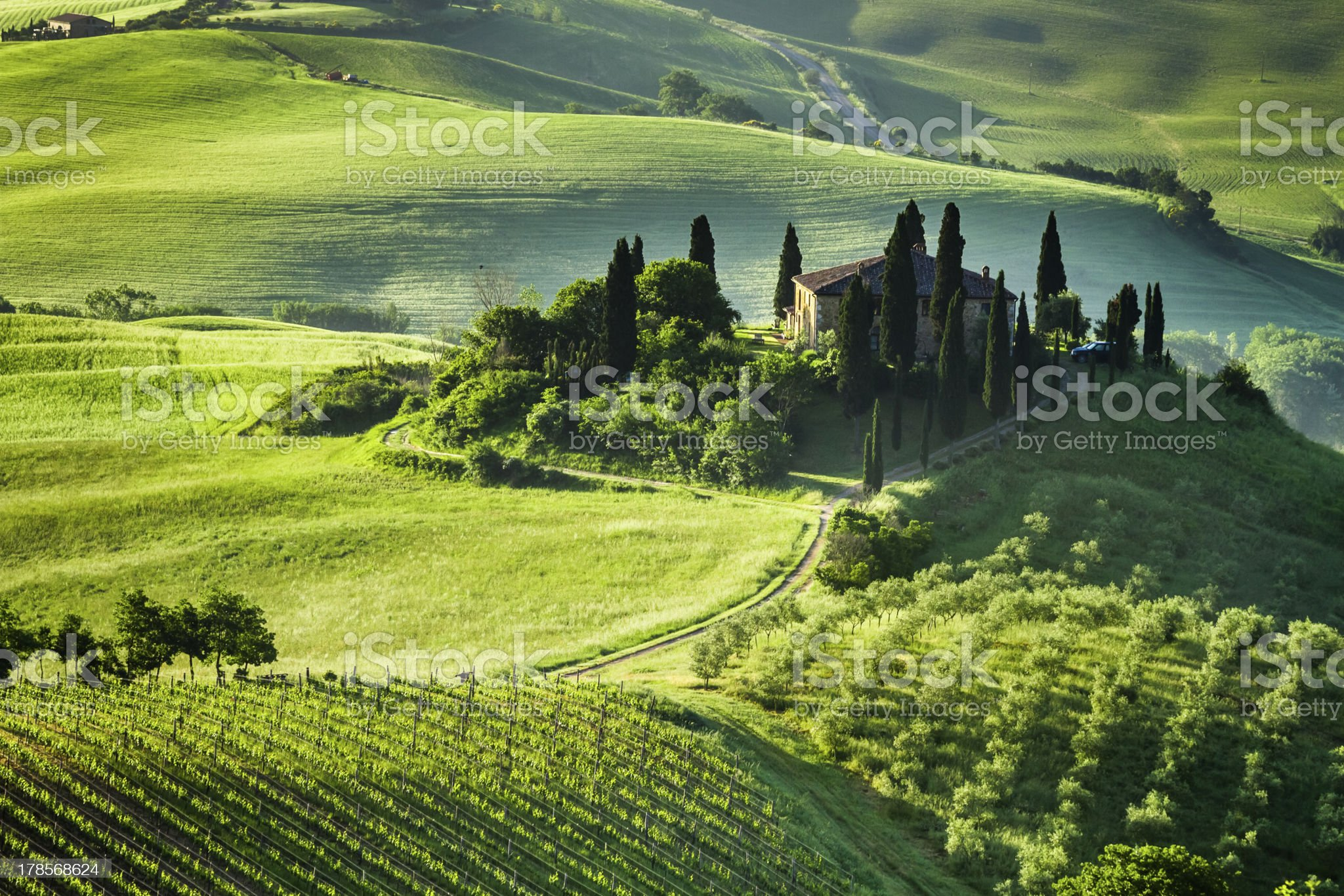 Beautiful sunrise of a green valley of olive groves royalty-free stock photo