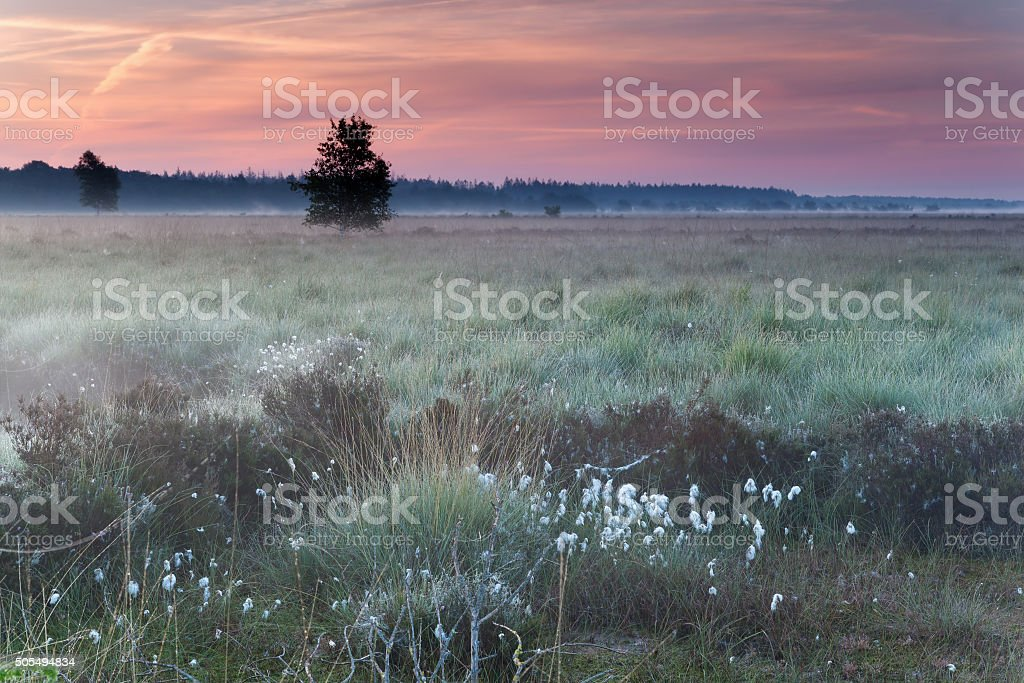 beautiful sunrise on marsh stock photo