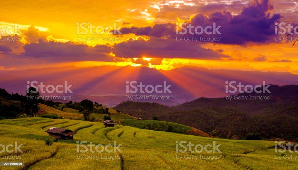 Beautiful sunset atTerraced Paddy Field stock photo