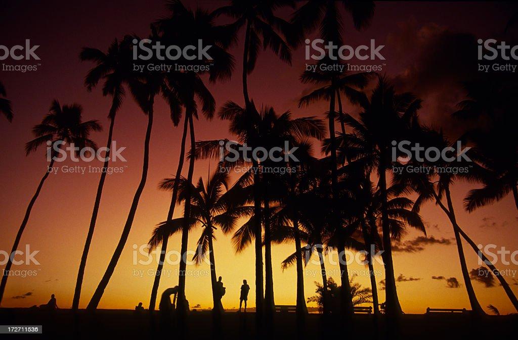 Beautiful sunset behind palms in Hawaii 2. Shot near Honolulu. royalty-free stock photo