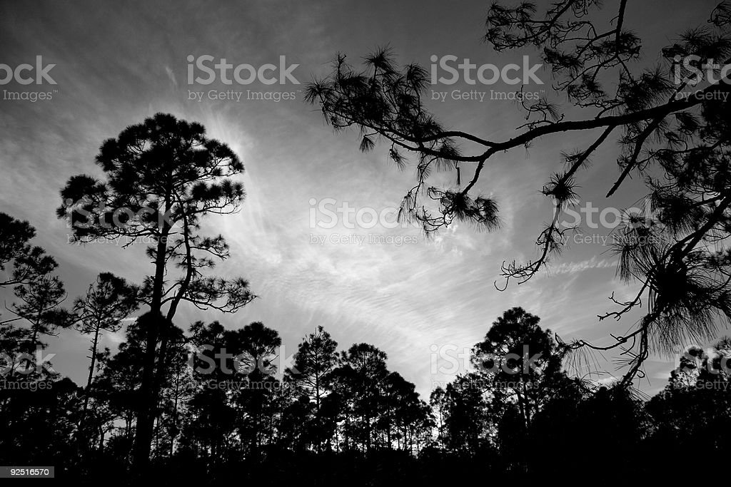 Beautiful Sunset Framed by Pine Trees royalty-free stock photo