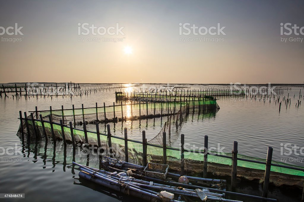 beautiful sunset in Oyster Farm stock photo