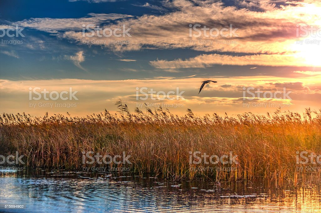 Beautiful Sunset In The Danube Delta stock photo