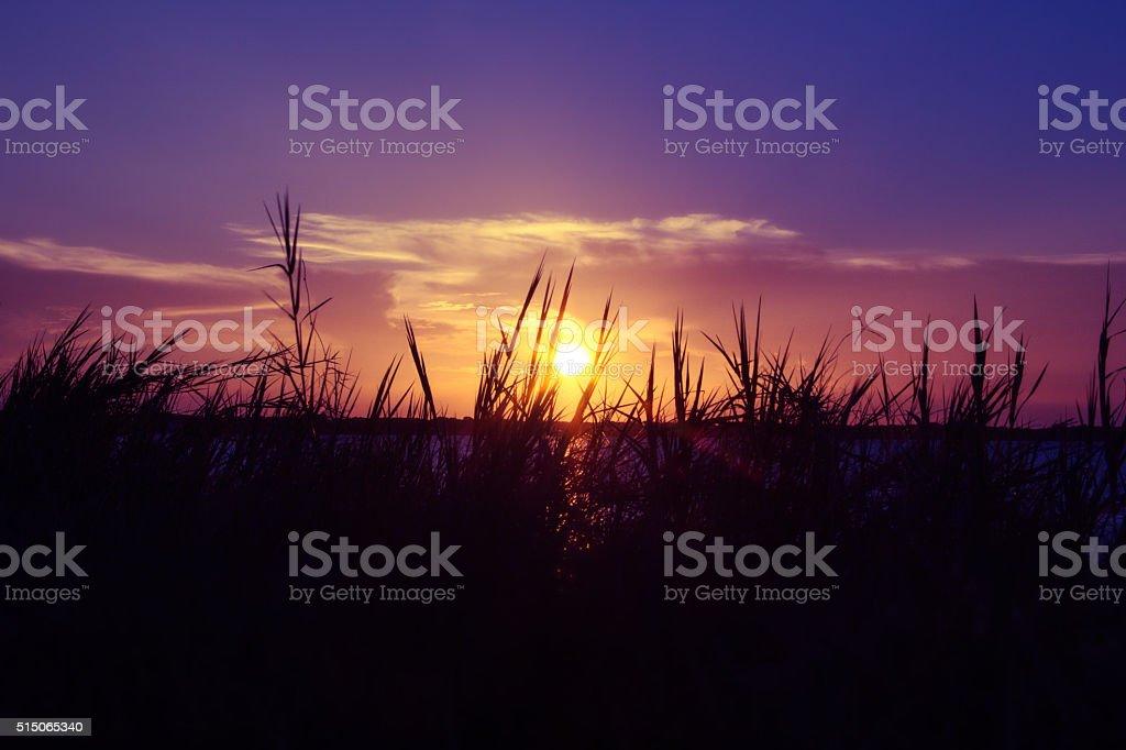 Beautiful  sunset in the Florida coast stock photo