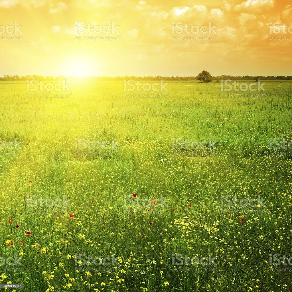 Beautiful sunset on a spring field stock photo