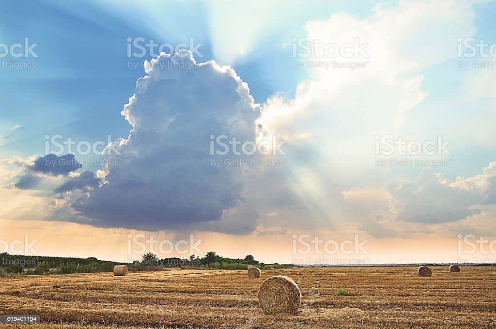 Beautiful sunset on the field with harvested wheat stock photo