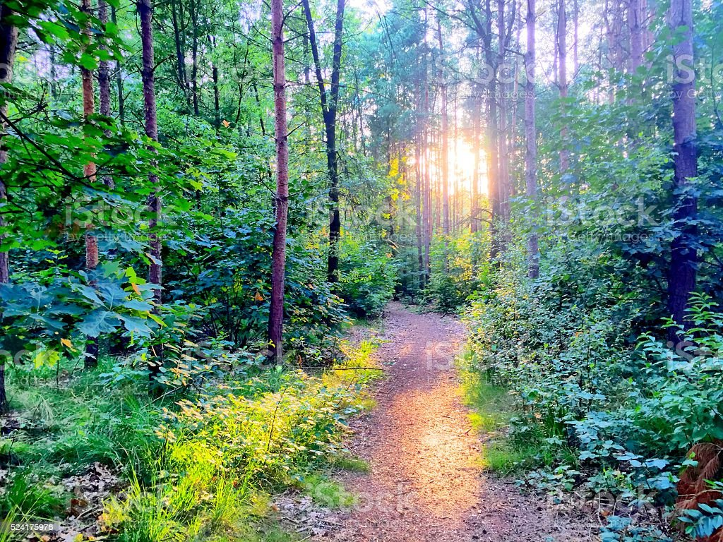 Beautiful sunset over a forest stock photo