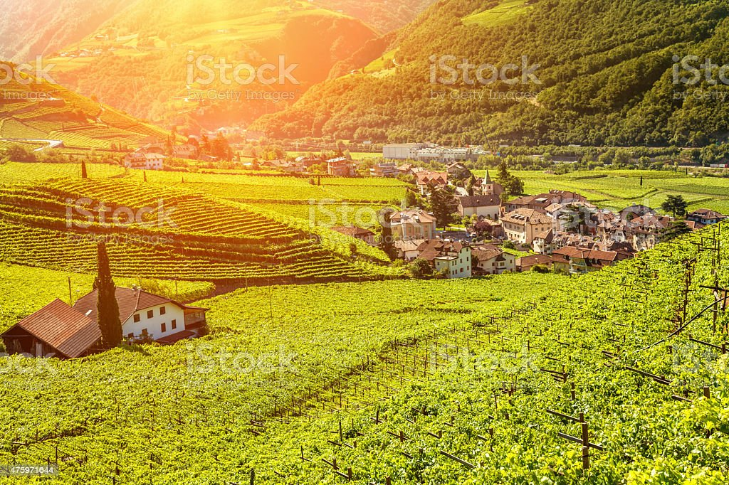 Beautiful sunset view over a vineyard in Italy stock photo