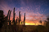 Beautiful Sunset with Saguaro Cactus in the Sonoran Desert