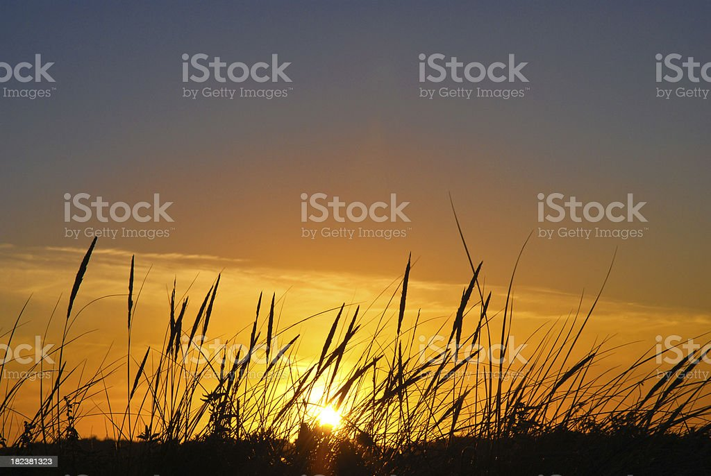 Beautiful sunset with wild grass in foreground royalty-free stock photo