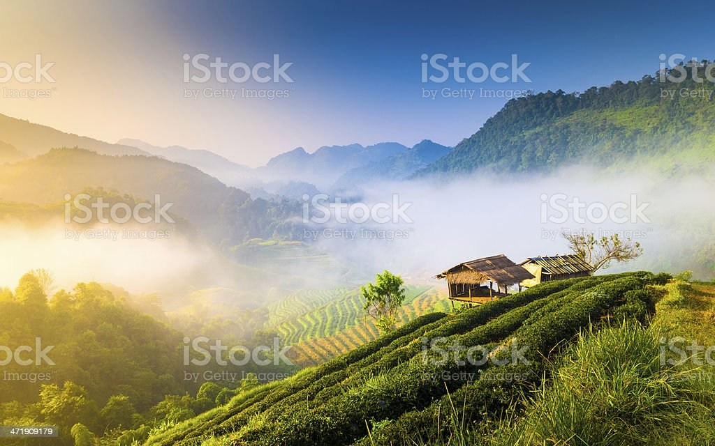 Beautiful sunshine at misty morning mountains . stock photo