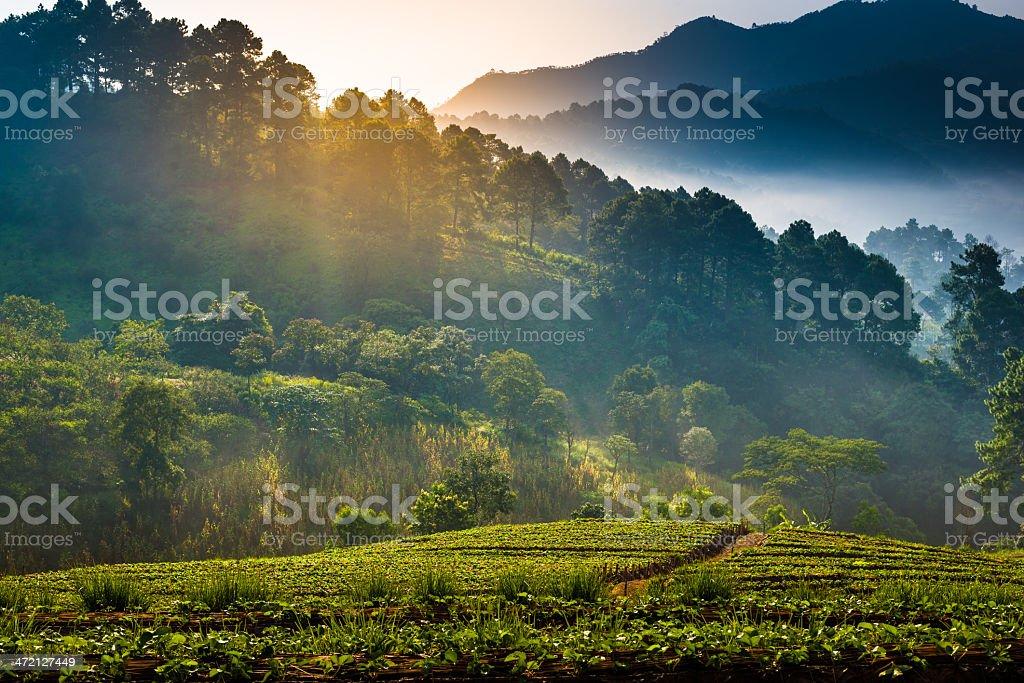 Beautiful sunshine at misty morning mountains . royalty-free stock photo