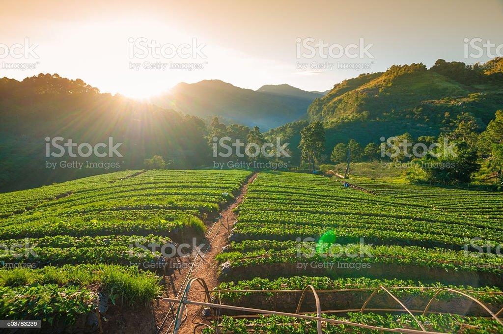 Beautiful sunshine at misty morning mountains . stock photo