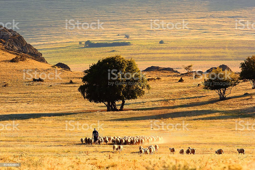 Beautiful sunshine landscape with shepherd and sheep stock photo