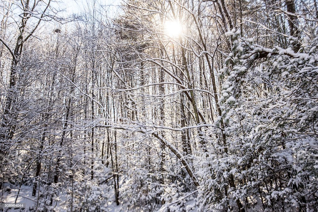 Beautiful sunstar over snow covered trees. stock photo