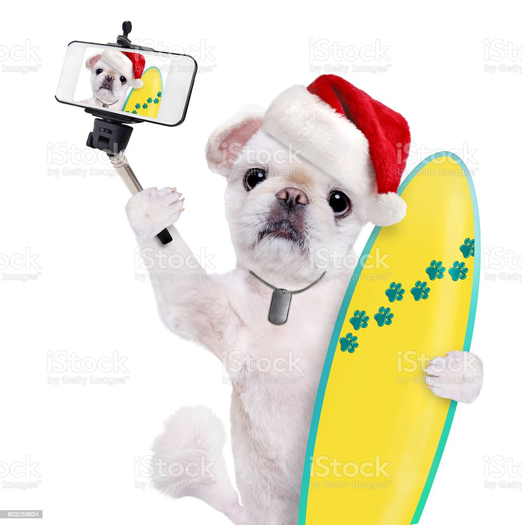 Beautiful surfer dog in red Christmas hat. stock photo