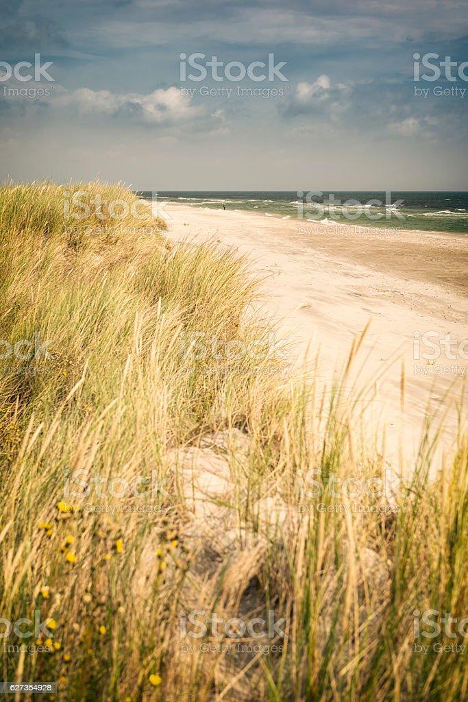 Beautiful Swedish beach with dune grass stock photo