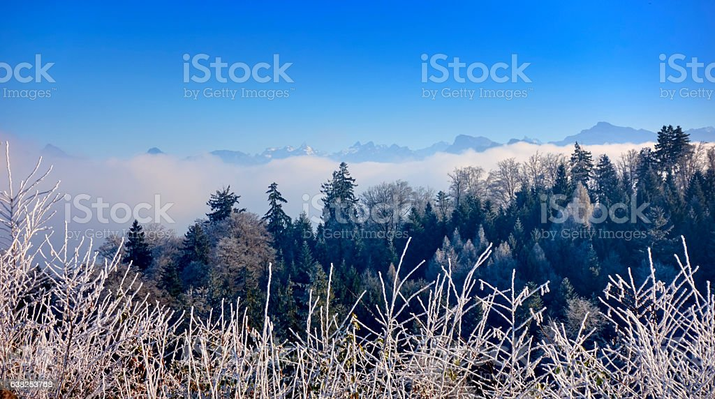 Beautiful Swiss Winter Mountain Range with Forest stock photo