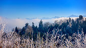Beautiful Swiss Winter Mountain Range with Forest