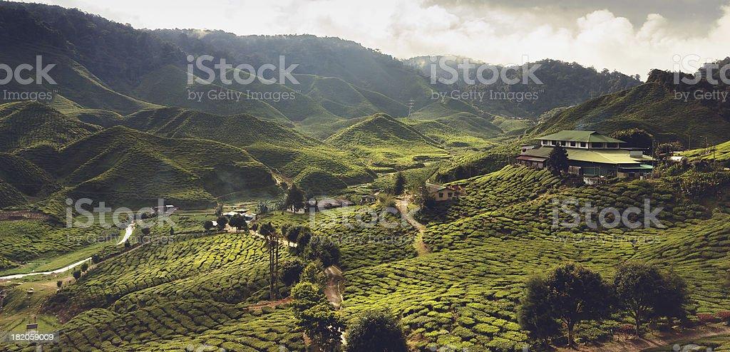 Beautiful Landscape With Tea Plantation Stock Photo - Image: 67443086