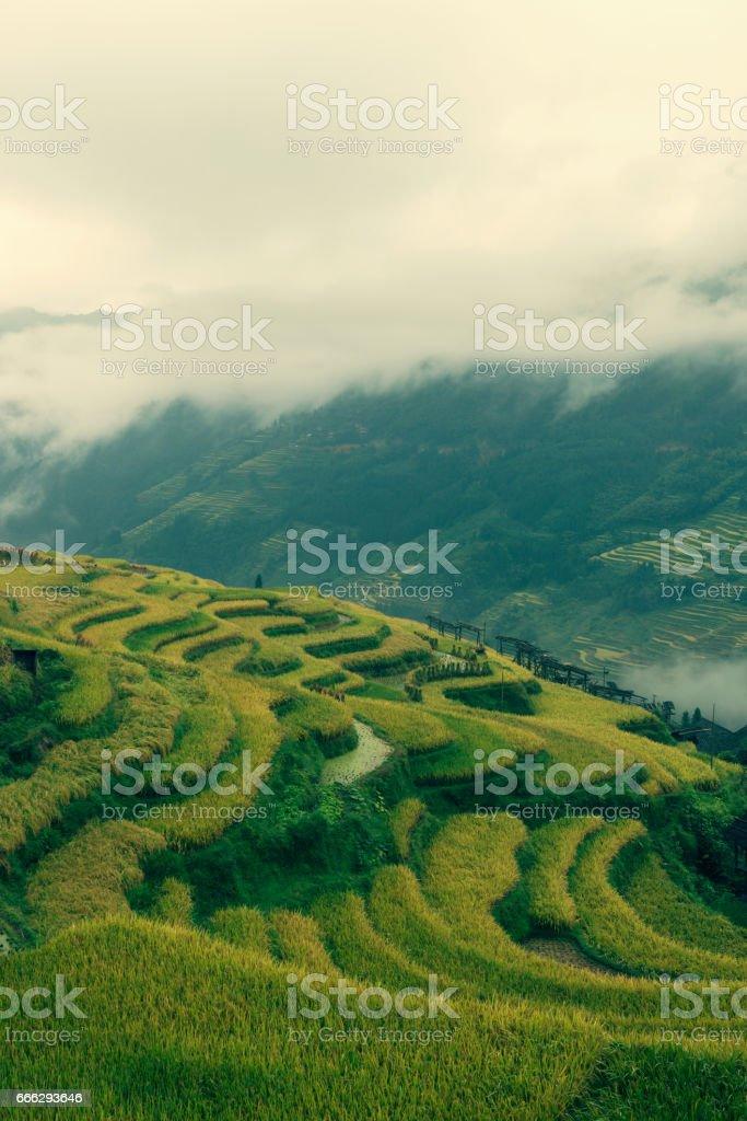 beautiful terraced stock photo