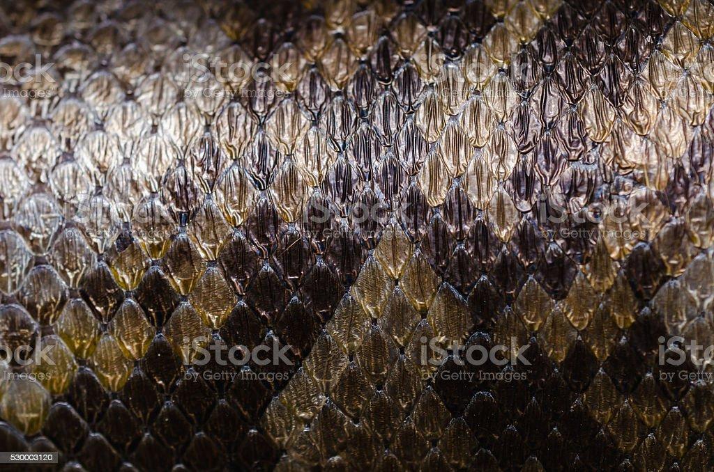 Beautiful texture of python skin. stock photo