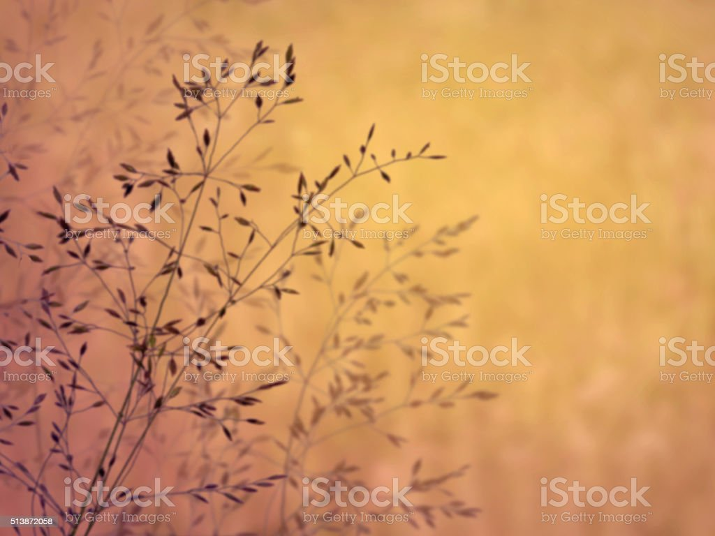 Beautiful Tranquil Morning Grass Field Scenic Nature Abstract Background stock photo