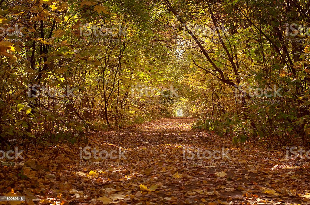 beautiful  tree alley in forest, autumn natural background stock photo