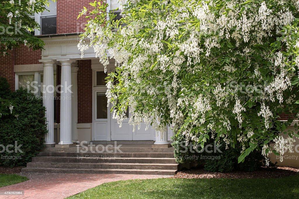 Beautiful tree and flowers stock photo