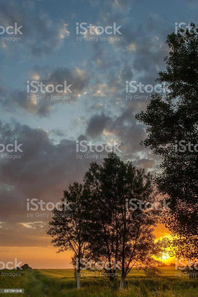 Beautiful Tree and wheat field beneath hill in sunset. Horizonta stock photo