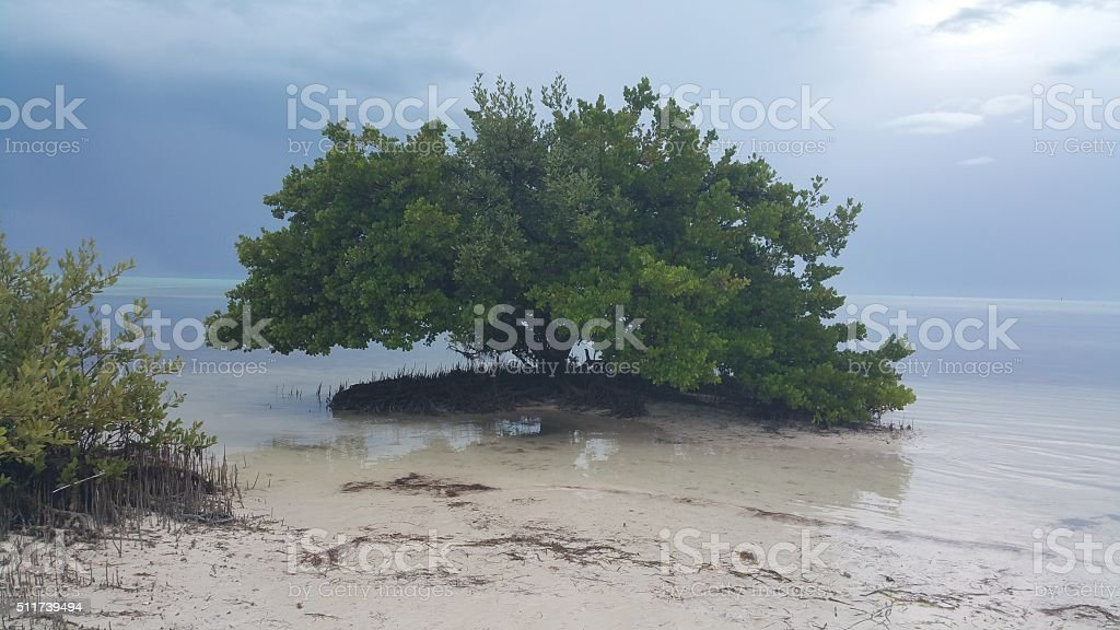 Beautiful tree covered in water stock photo