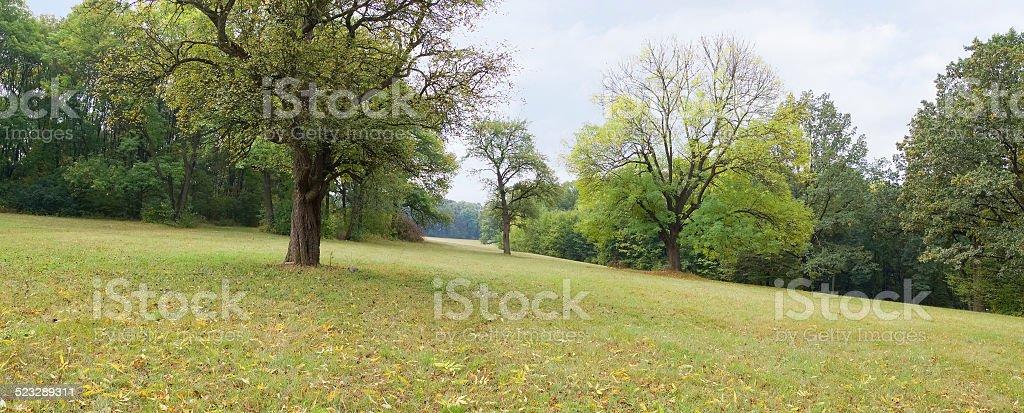 Beautiful tree in autumn park stock photo