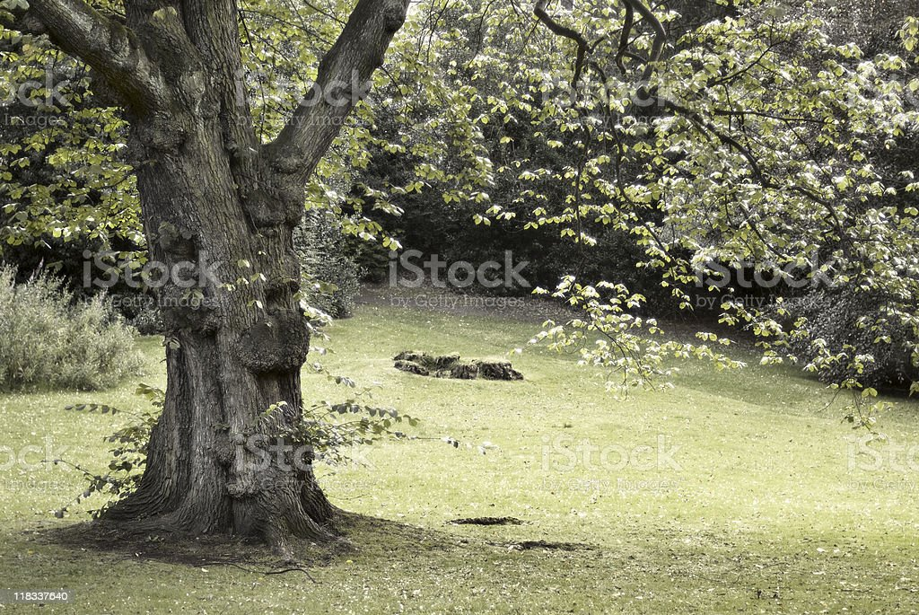 Beautiful tree in glowing light royalty-free stock photo