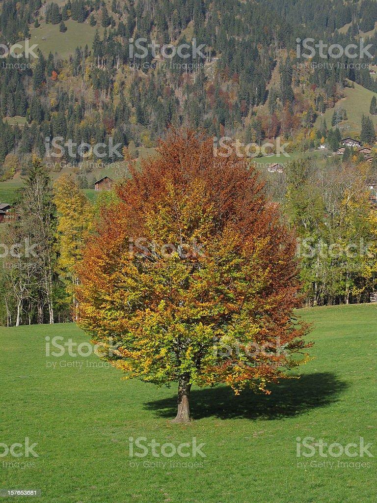 Beautiful Tree In The Autumn stock photo