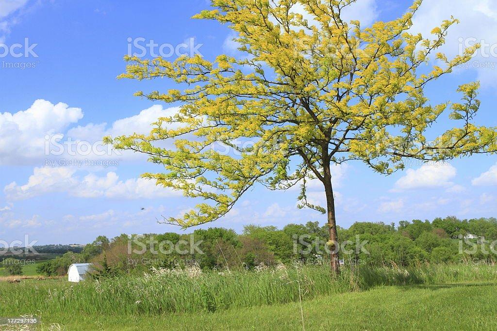 Beautiful tree royalty-free stock photo