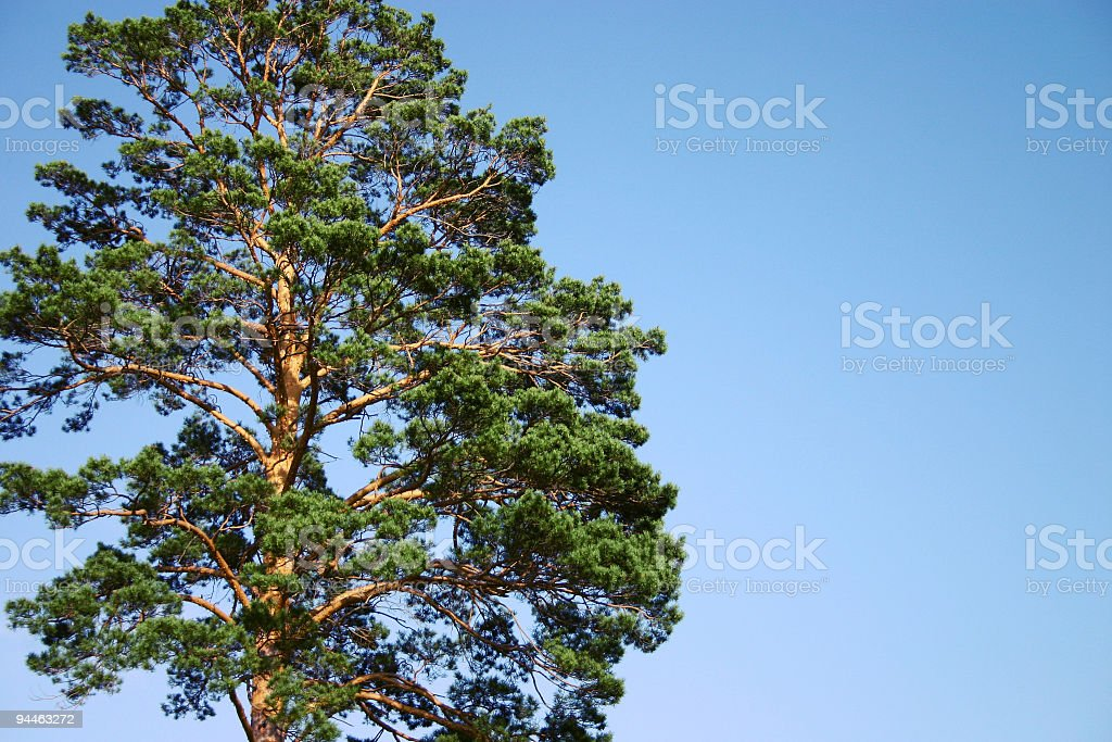 Beautiful tree stock photo
