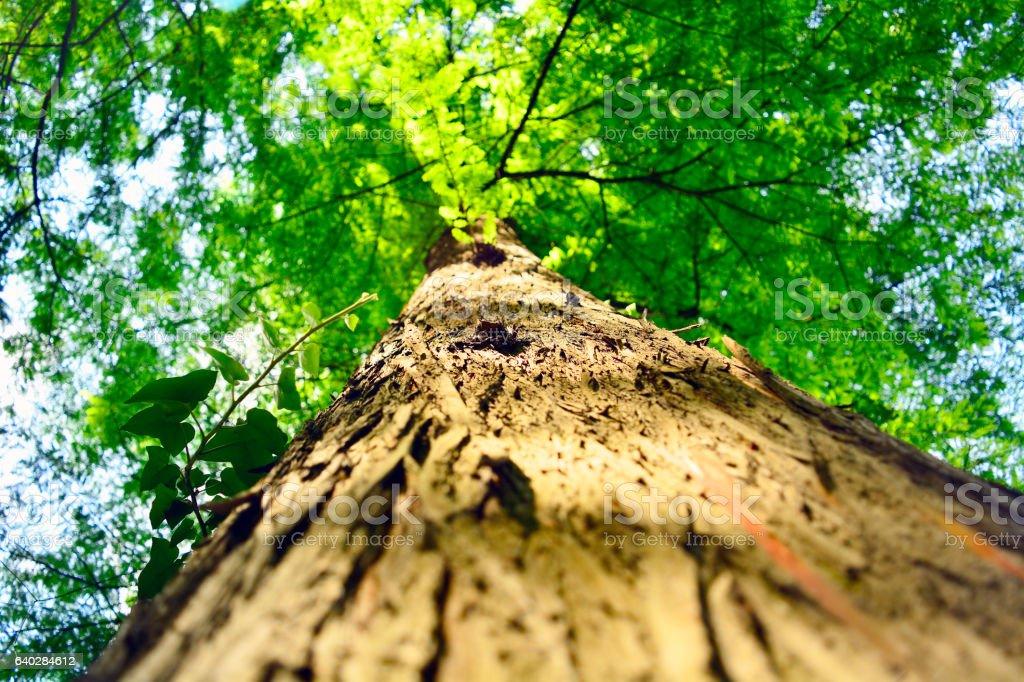 beautiful tree, seen from below stock photo