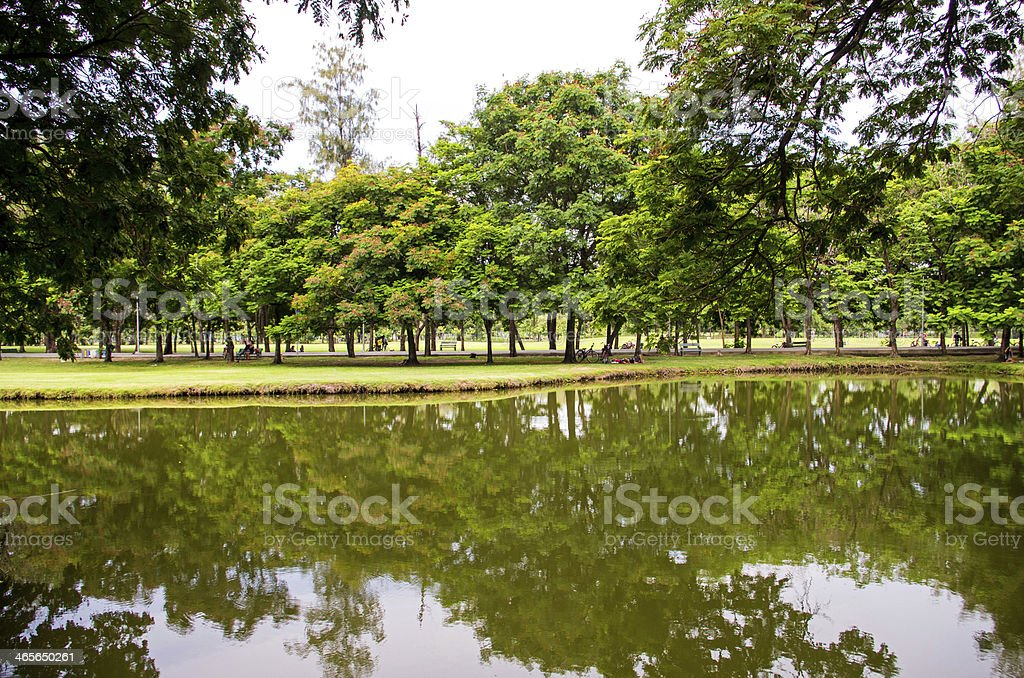 beautiful tree with a reflection in the park stock photo