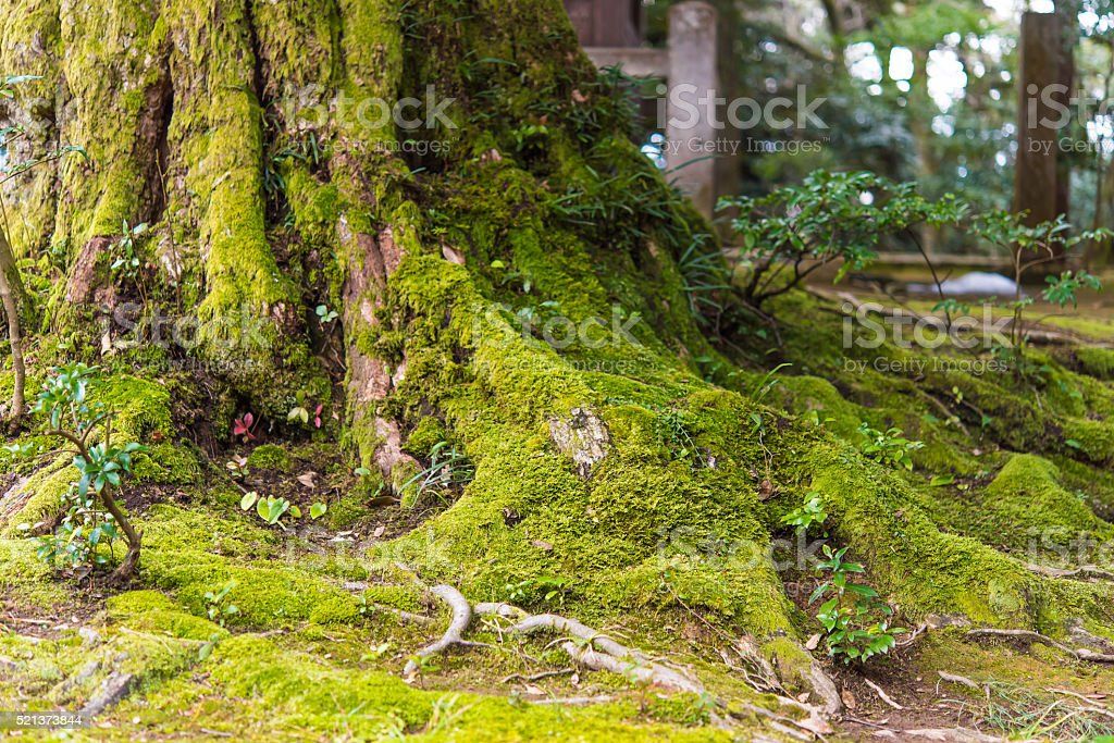 Beautiful tree with moss stock photo