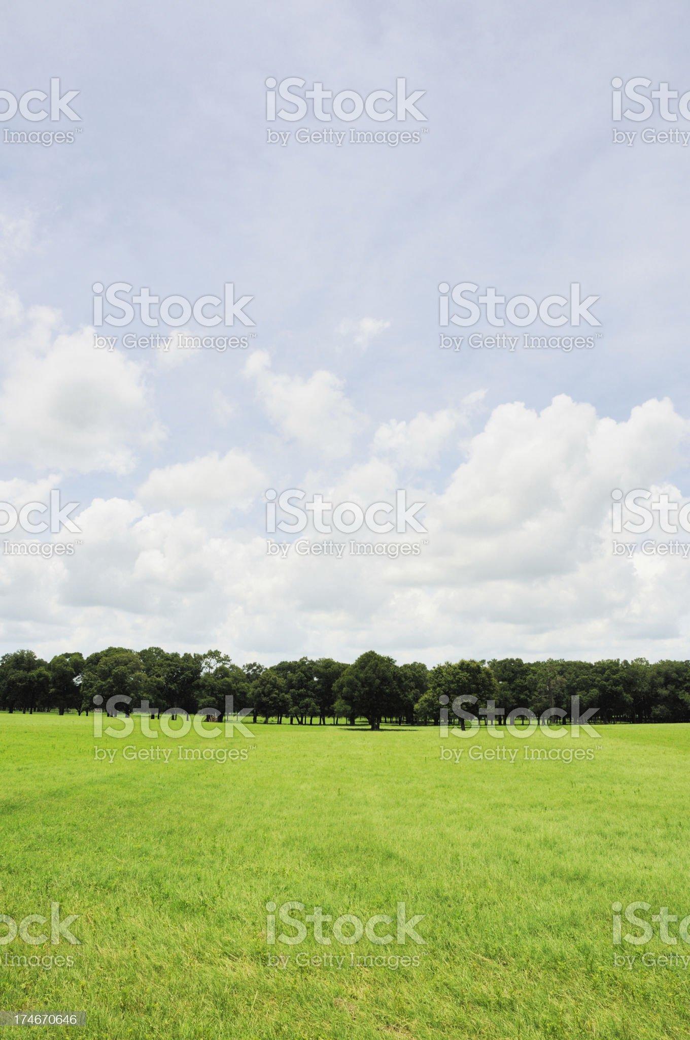 Beautiful Treelined Pasture on a Ocala Florida Horse Farm royalty-free stock photo
