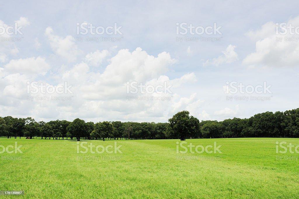 Beautiful Treelined Pasture on a Ocala Florida Horse Farm stock photo