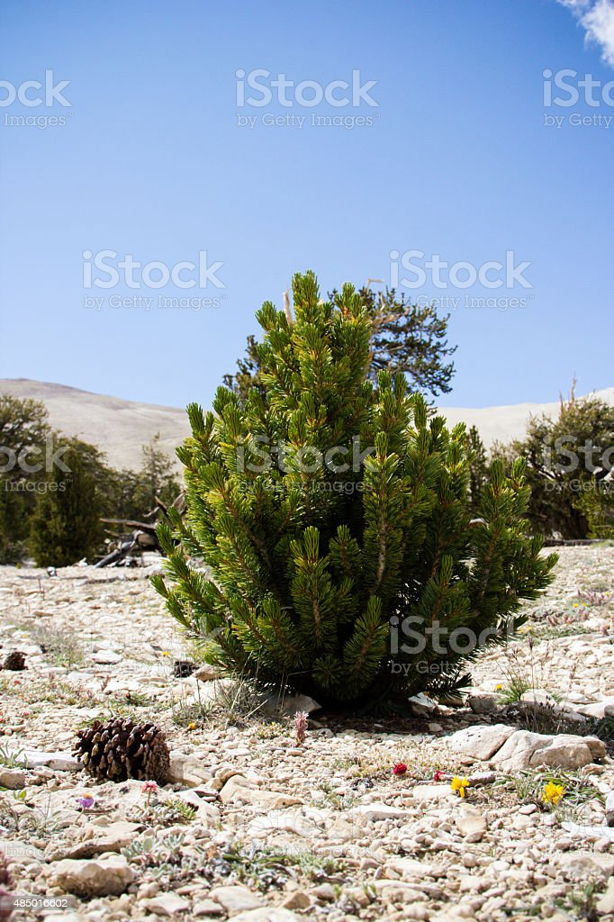Beautiful trees and blue sky landscape in summer stock photo