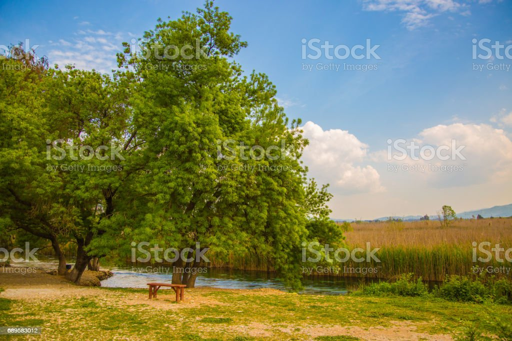 A beautiful trees and river view stock photo