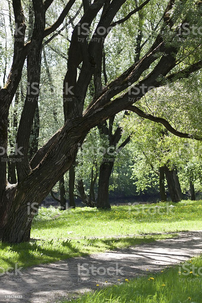 Beautiful trees in a park royalty-free stock photo