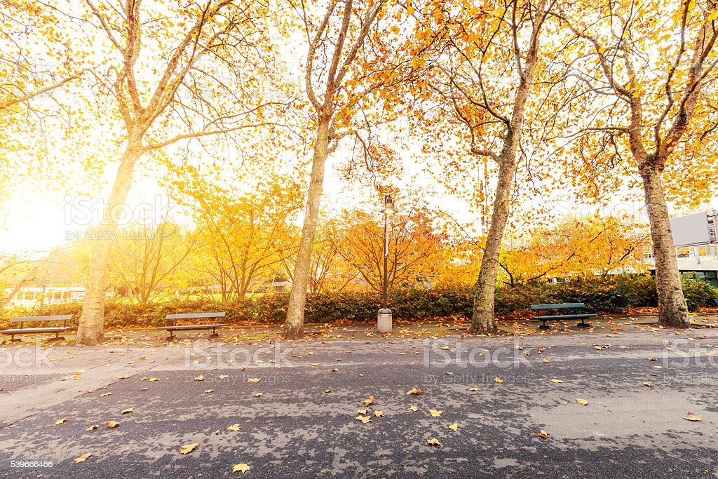 beautiful trees with yellow leaves by road stock photo
