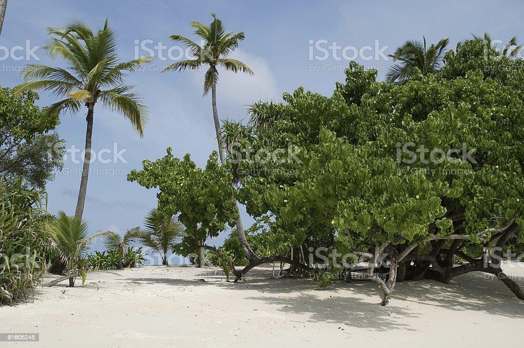 Bela praia tropical foto royalty-free