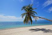 beautiful tropical beach white sand coconut tree with blue sky