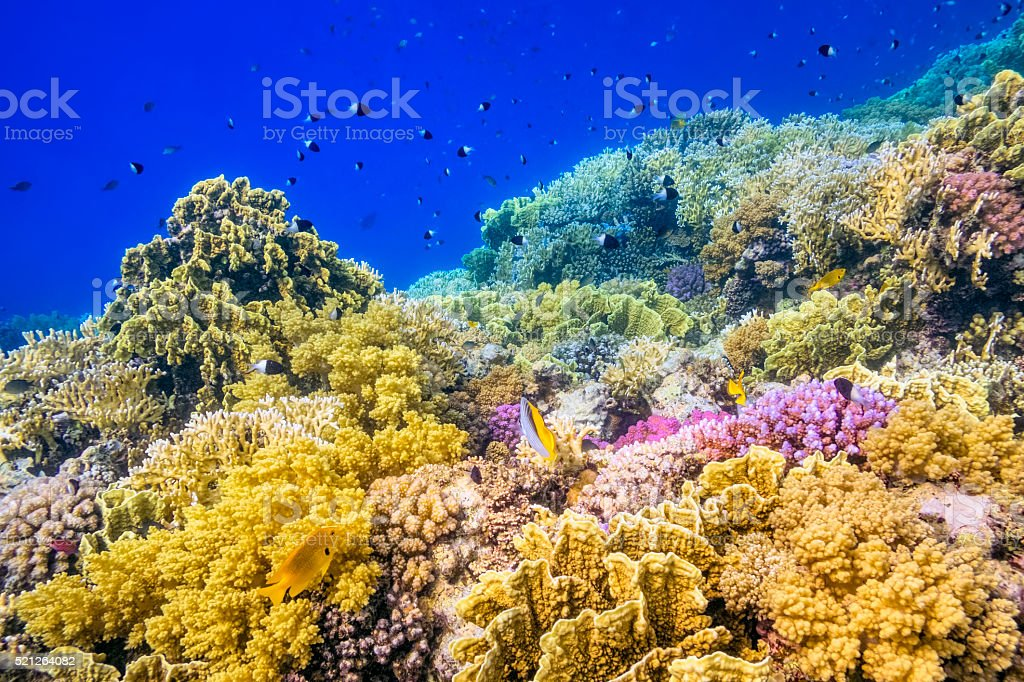Beautiful tropical Coral Reef on Red Sea stock photo